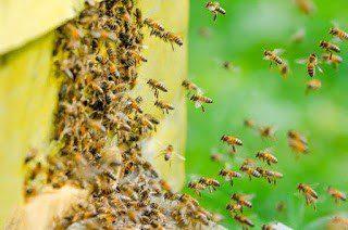 Homestead Blog Hop Feature - Homestead Beekeeping