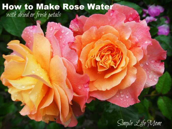 How to Make Rose Water by Simple Life Mom