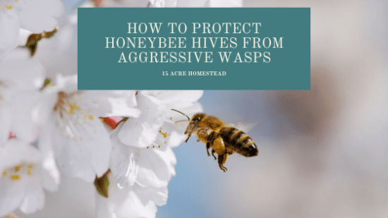 Homestead Blog Hop Feature - How-to-Protect-Honeybee-Hives-from-Aggressive-Wasps