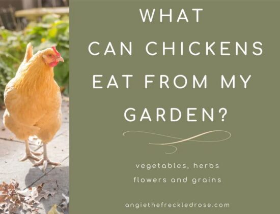 Homestead Blog Hop Feature - What Can Chickens Eat from my Garden