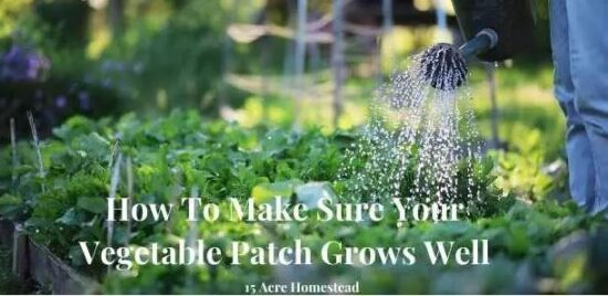 Homestead Blog Hop Feature - How-To-Make-Sure-Your-Vegetable-Patch-Grows-Well