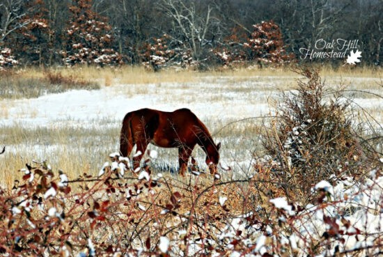Homestad Blog Hop Feature - How to Keep Livestock Water from Freezing