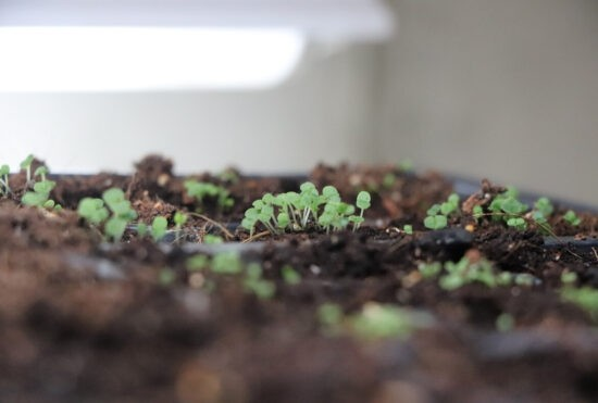 Homestead Blog Hop Feature - How-To-Grow-Oregano-From-Seed
