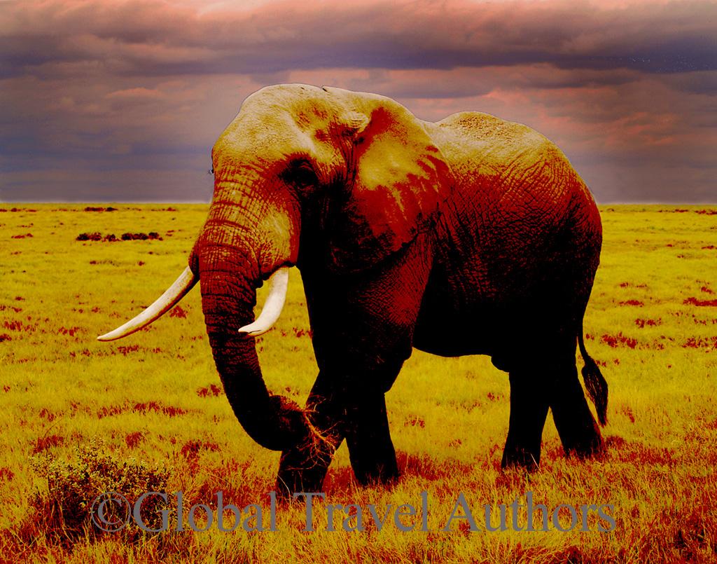 Elephant in amboseli national park