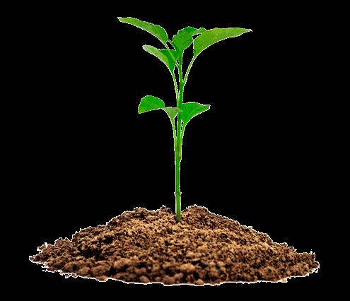 Paisaje vegetal para cubiertas
