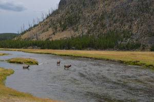 YellowstoneAnimal_002