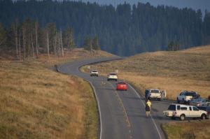 YellowstoneAnimal_008