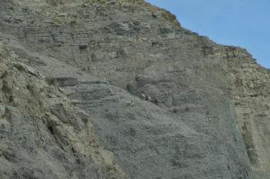 YellowstoneAnimal_010