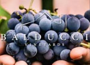 TboLive @ Balducci Vineyards | Augusta | Missouri | United States