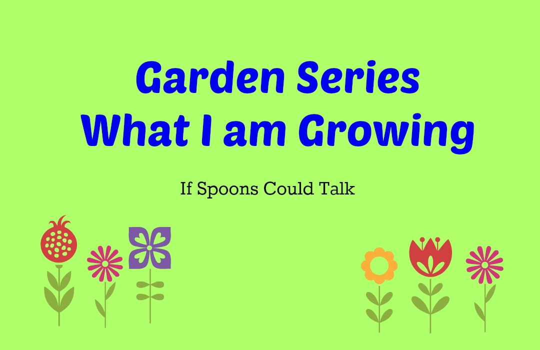Garden Series. Check out the herbs that I am growing and my plans for the near future.