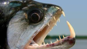 Pesci pericolosi nel Mediterraneo