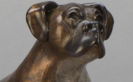 Dog Paddle Boxer Close Up