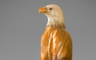Eagle Side View