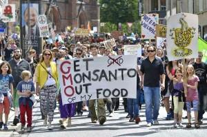 (GMO) genetically modified organism