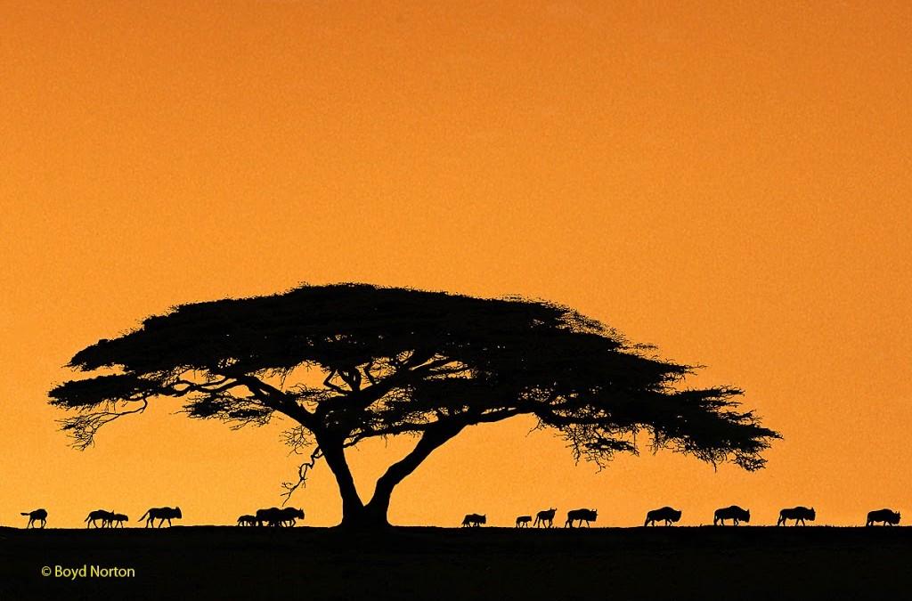 My August Newsletter – Serengeti Update, Wyoming Workshop, more …