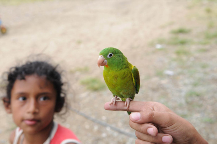 A girl looks at a bird perched on a child's finger, near homes built on a toxic landfill in Medellin, Colombia.