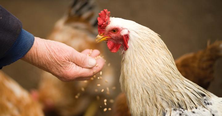 Is MuscleFoods chicken free range