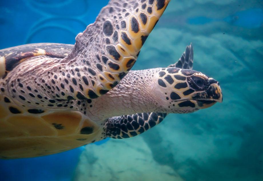 mexico-mazunte-zipolite turtle