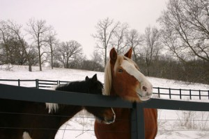 winter blog 2-3