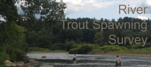 Cover photo for the Final Report on the 2018 DRWTU Trout Spawning Study