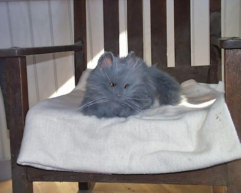 Smokey-the-cat