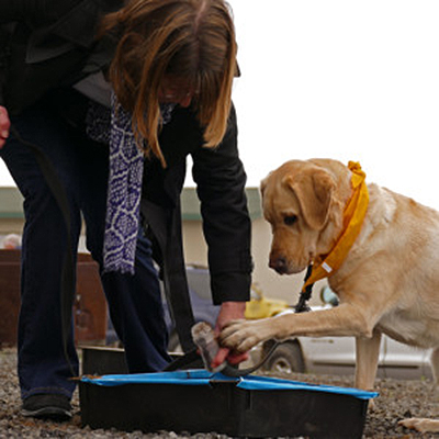 Truffle Dog Training