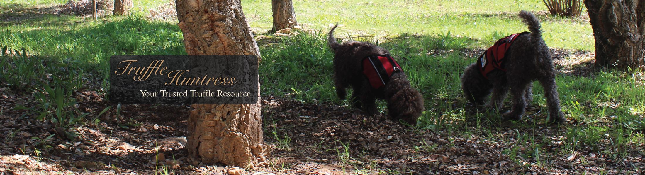 Truffle Huntress
