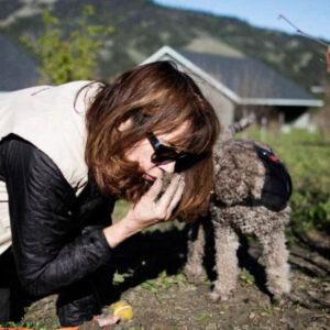 Ca truffle dogs