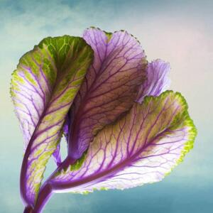 Creative 2nd Place - Ornamental Cabbage Kathy Urbach