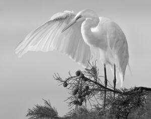 Monochromatic - 1st Place Jeff Bishop Earth Angel