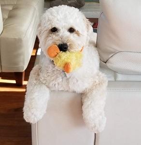 Tara - Our Dog