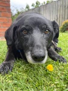 Anita Gupte Dog