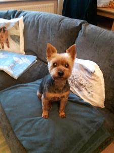 charlie king dog