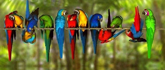 Most Beautiful Long-Tailed Birds of Indian Subcontinent