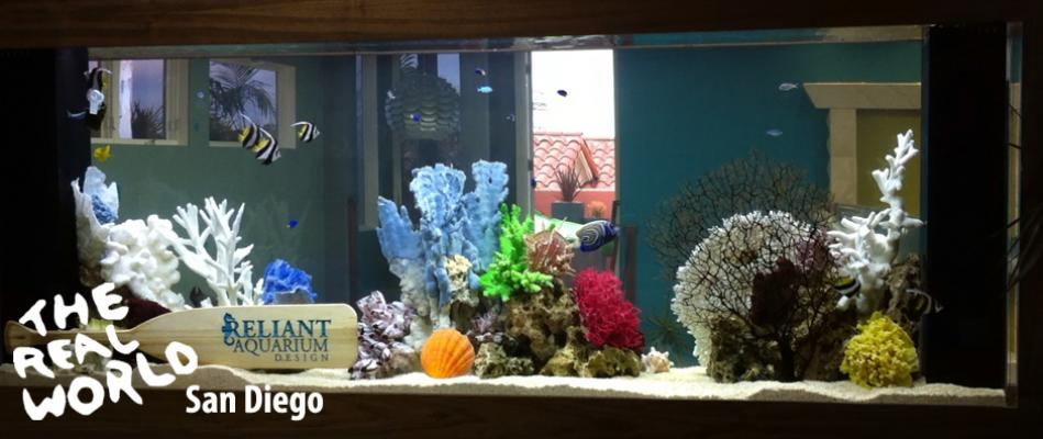 reliant-aquarium-real-world-3-1