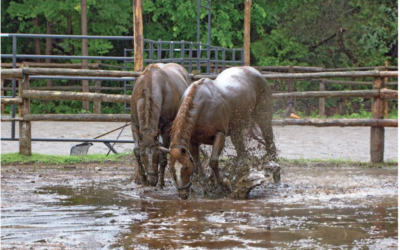 8 Things Not to Overlook When Viewing Horse Farms
