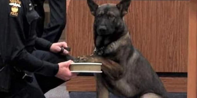 Police dogs searching for drugs can lead to an arrest. Dog in courtroom with a paw on a book.
