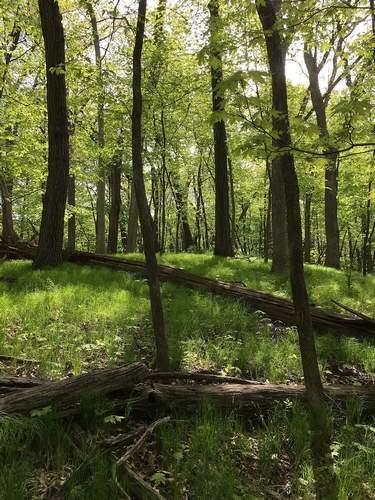Faulkes Heritage Woods