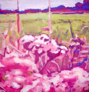 Pink Holland Wild Flowers