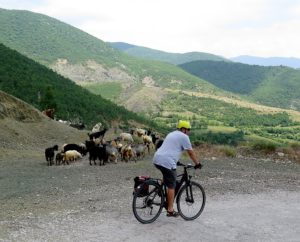 Biketours.com's president Jim Johnson riding his e-bike past a herd of goats © 2016 Karen Rubin/news-photos-features.com