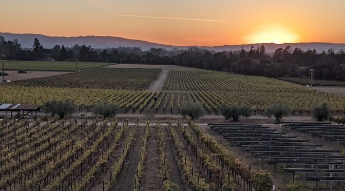 Wine & Art: The Perfect Pairing in Sonoma, California