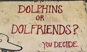 Dolfriends for sure!