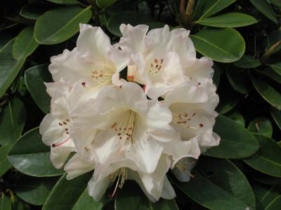 Unique Bloom