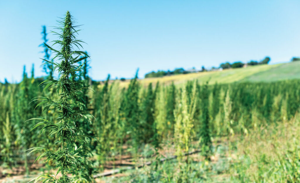 illinois adult cannabis sales