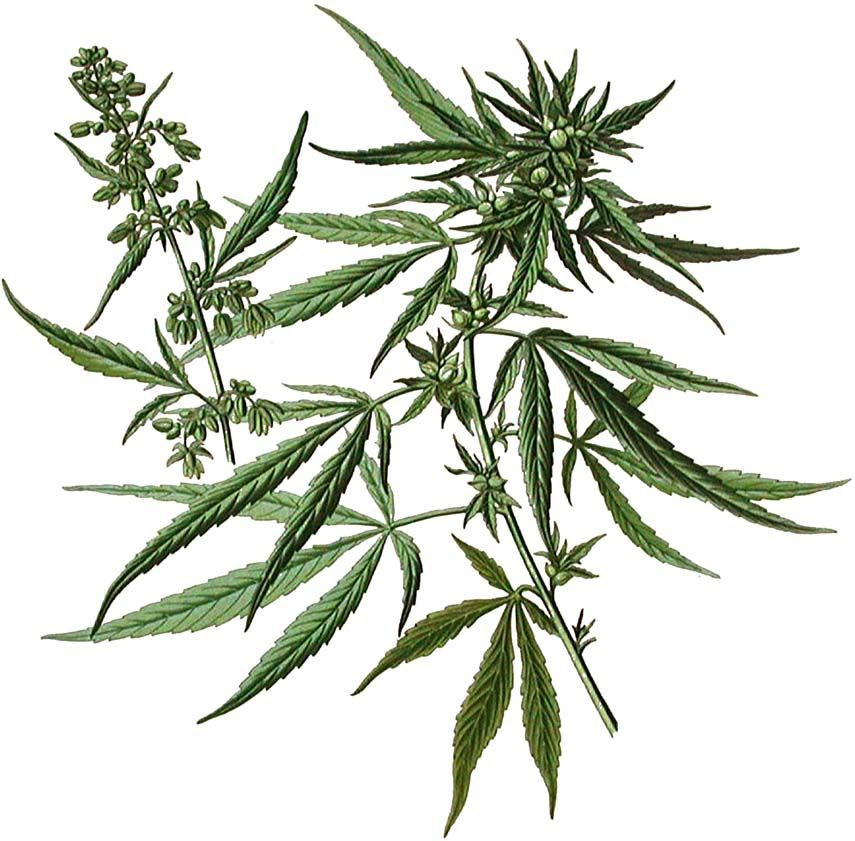 ACT Cannabis accounting services