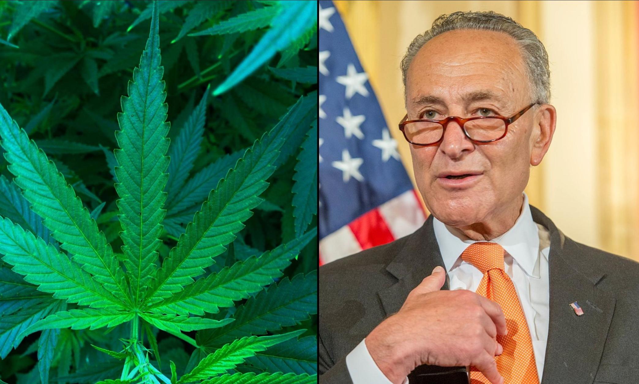 Cannabis News Chuck Schumer