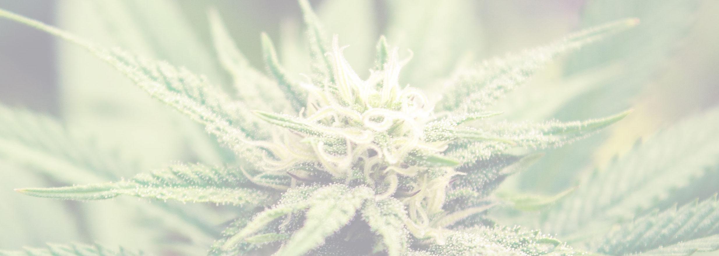 ACT April Cannabis Accounting News