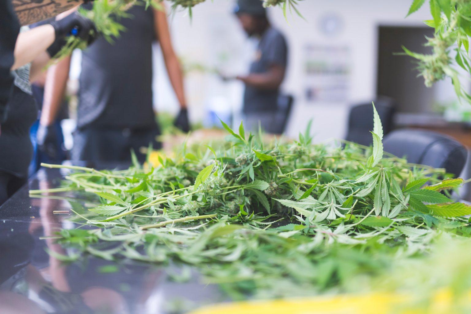 July Cannabis news updates