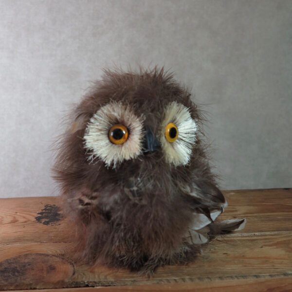brown feather owl home decor front