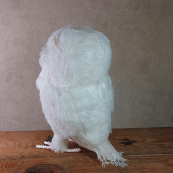 large snowy owl home decor winter back